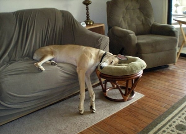 Image result for images of tired animals