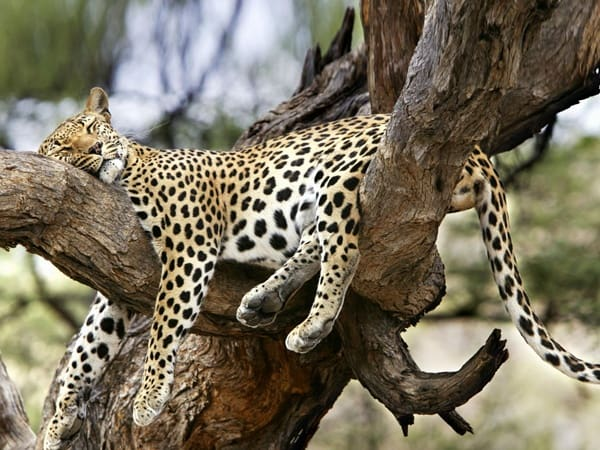 sleeping animals pose (42)