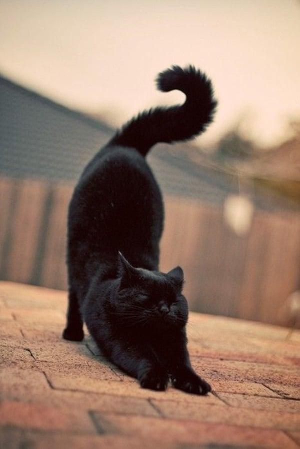 Beautiful Black  Aniamls (33)
