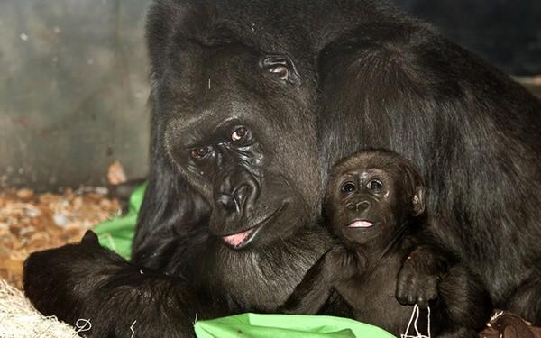 Beautiful Black  Aniamls (37)