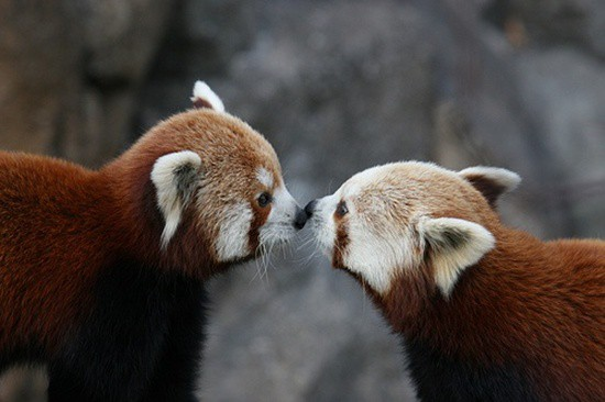 Kissing Animals (1)
