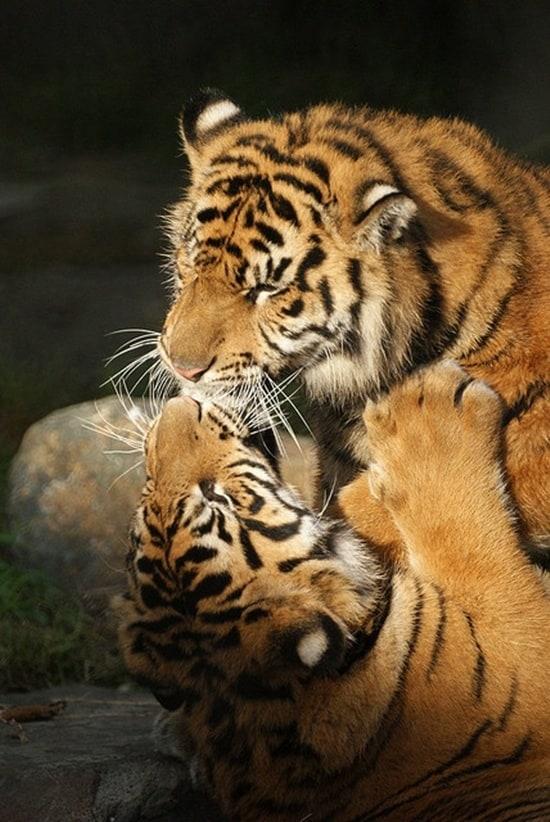 Kissing Animals (10)