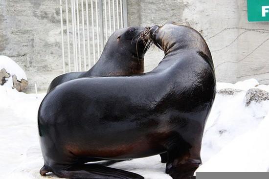 Kissing Animals (11)