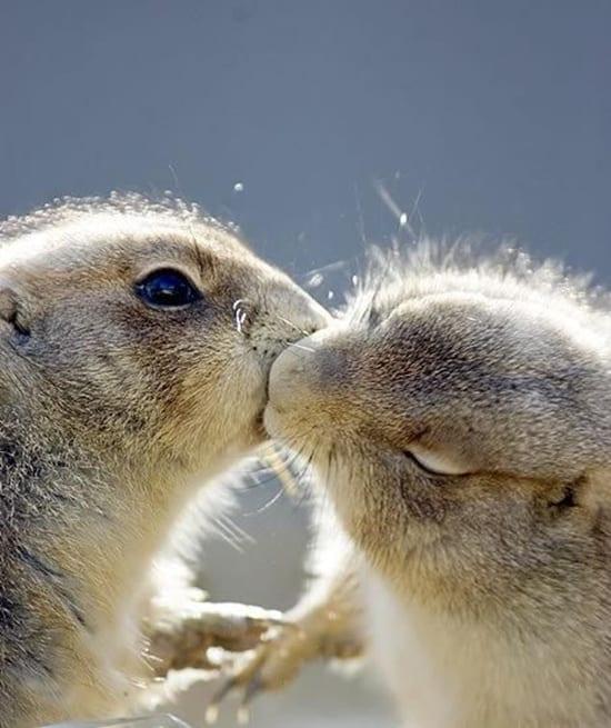 Kissing Animals (12)
