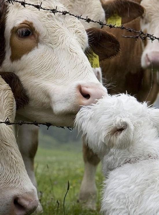 Kissing Animals (18)