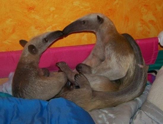 Kissing Animals (22)
