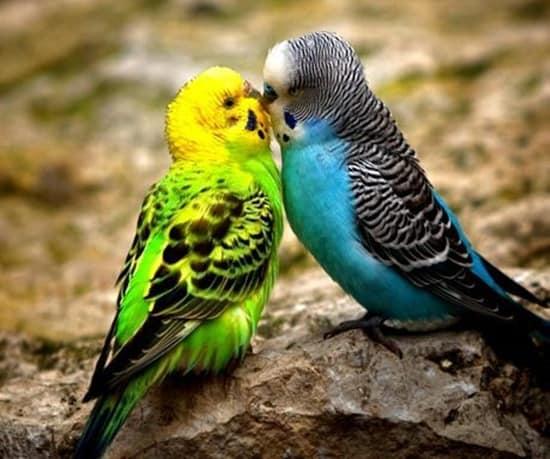 Kissing Animals (26)