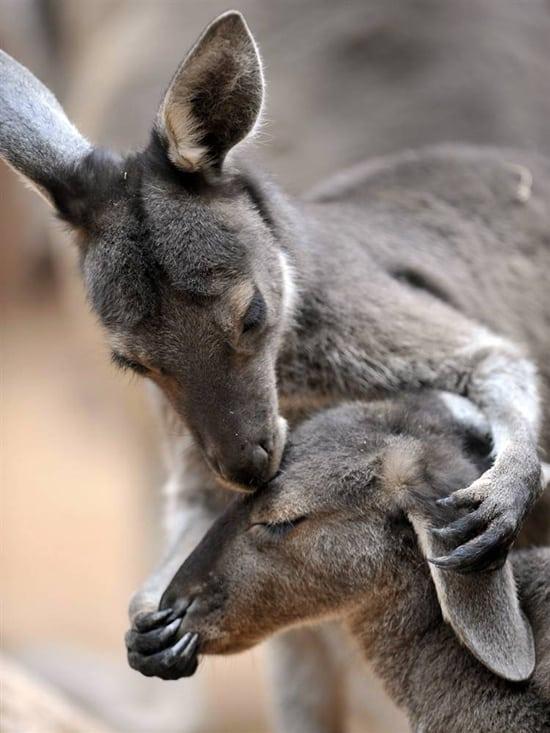 Kissing Animals (31)