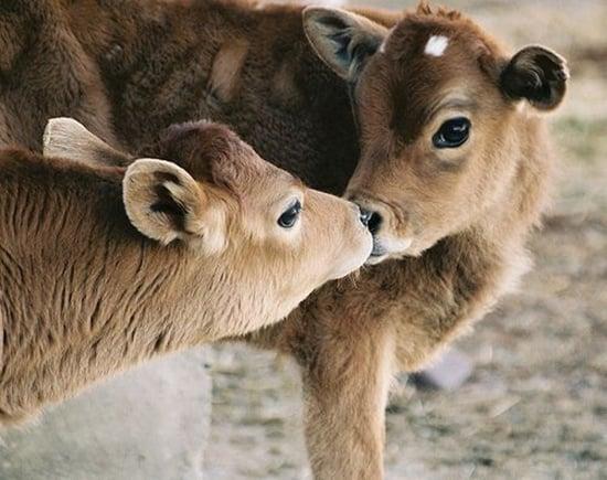 Kissing Animals (33)