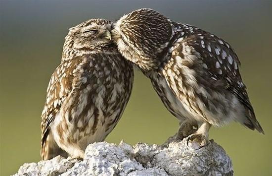 Kissing Animals (37)