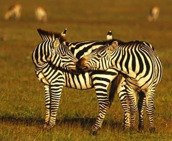 Kissing animals2