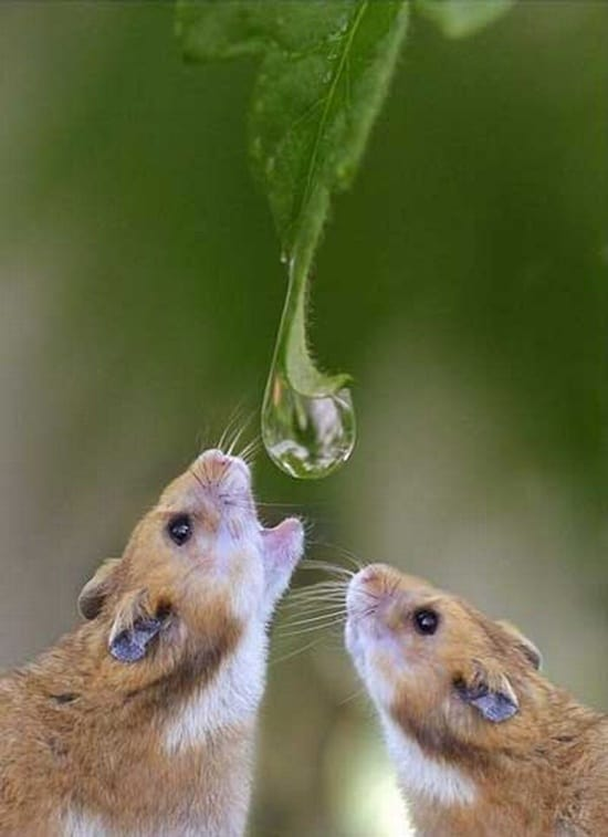 cute and funny pictures of animals drinking water (1)