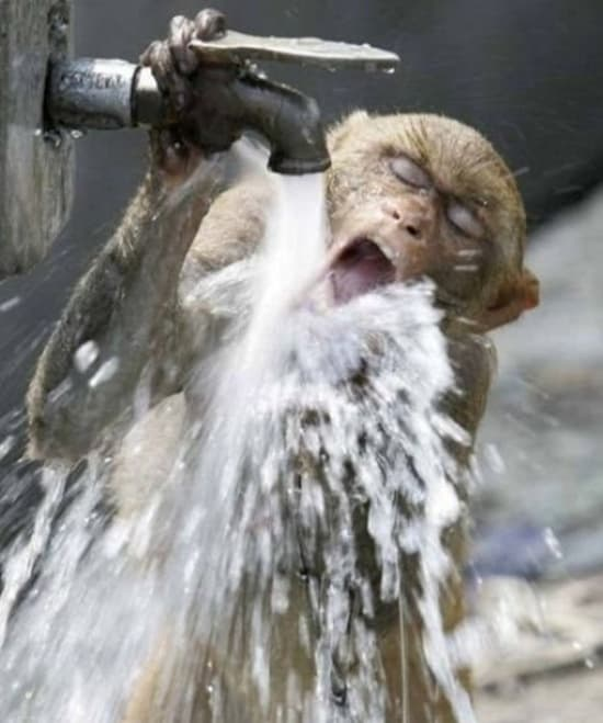 cute and funny pictures of animals drinking water (12)