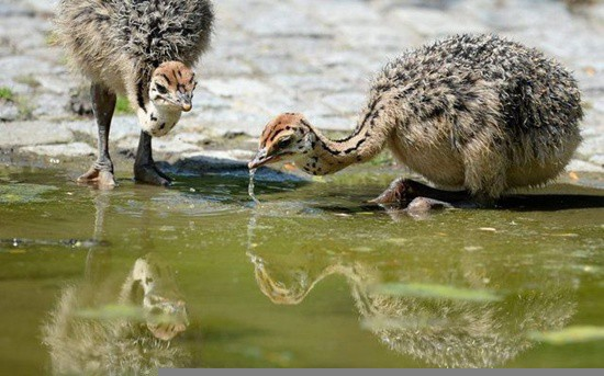 cute and funny pictures of animals drinking water (13)