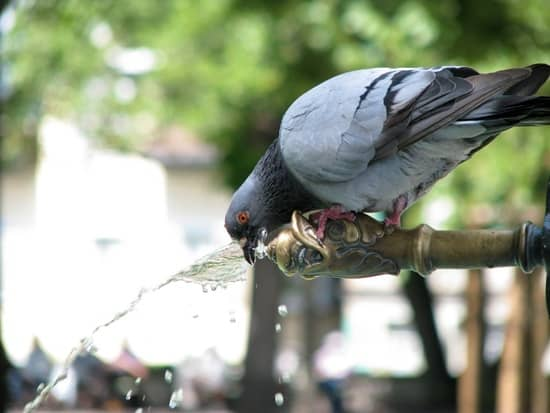 cute and funny pictures of animals drinking water (29)