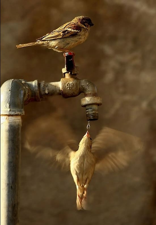 cute and funny pictures of animals drinking water (35)