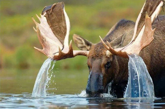 cute and funny pictures of animals drinking water (42)