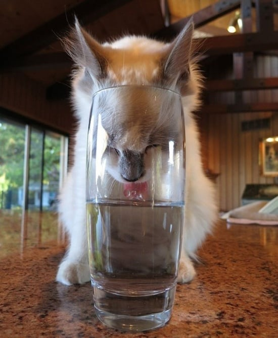 cute and funny pictures of animals drinking water (9)