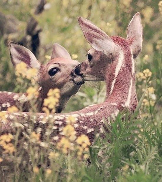 kissing animals