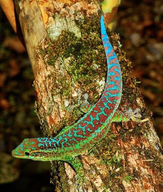 Different types of gecko (13)