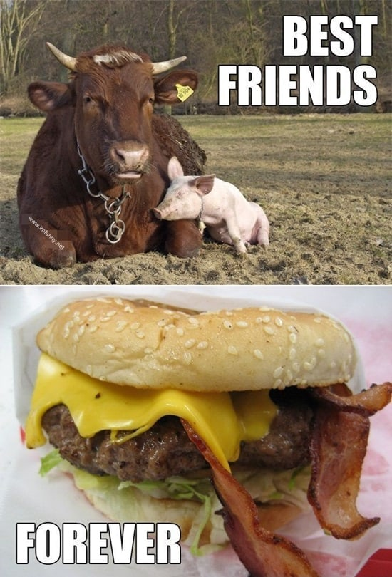 Funny Pigs Pictures (1)