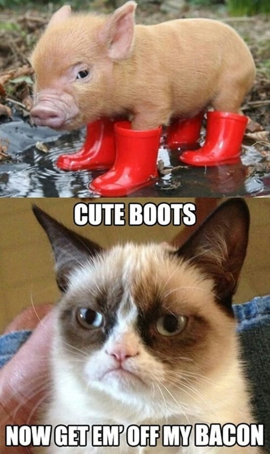 Funny Pigs Pictures (11)