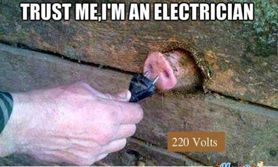 Funny Pigs Pictures (22)
