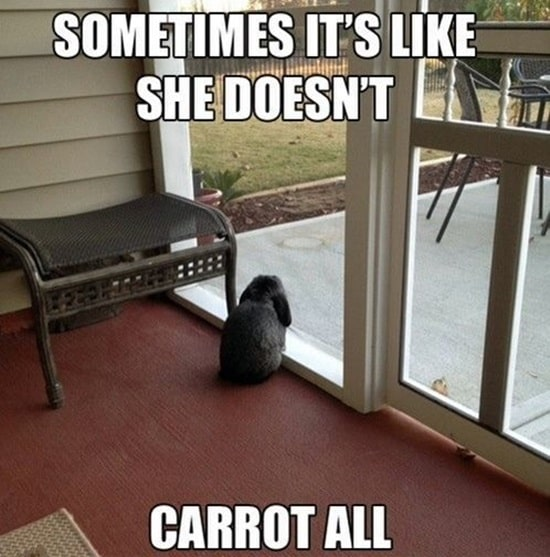 Funny Rabbit Pictures (1)