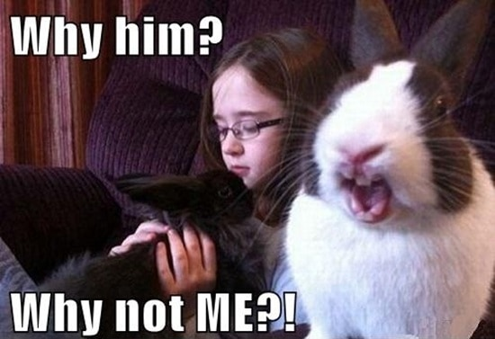 Funny Rabbit Pictures (11)