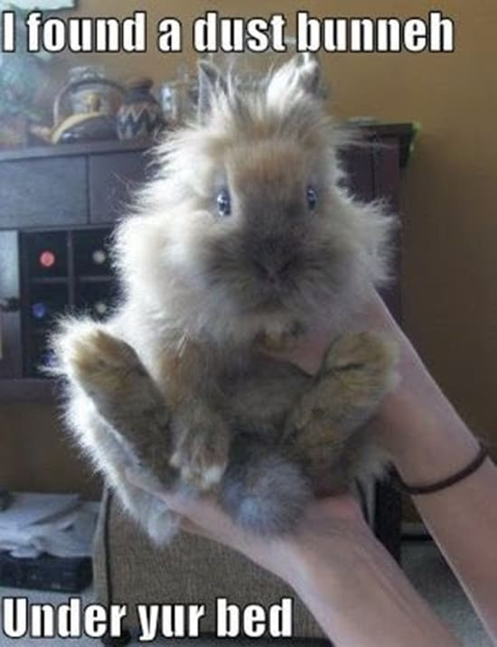 Funny Rabbit Pictures (13)