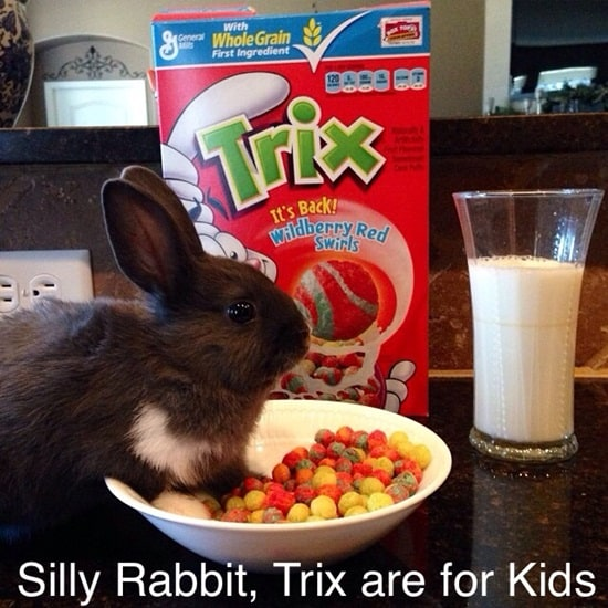 Funny Rabbit Pictures (16)