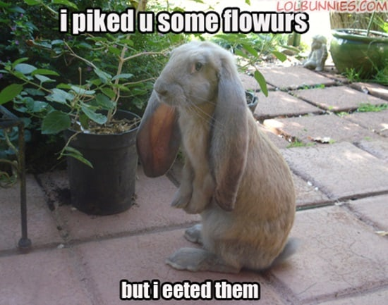 Funny Rabbit Pictures (19)