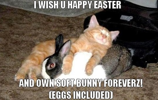 Funny Rabbit Pictures (20)