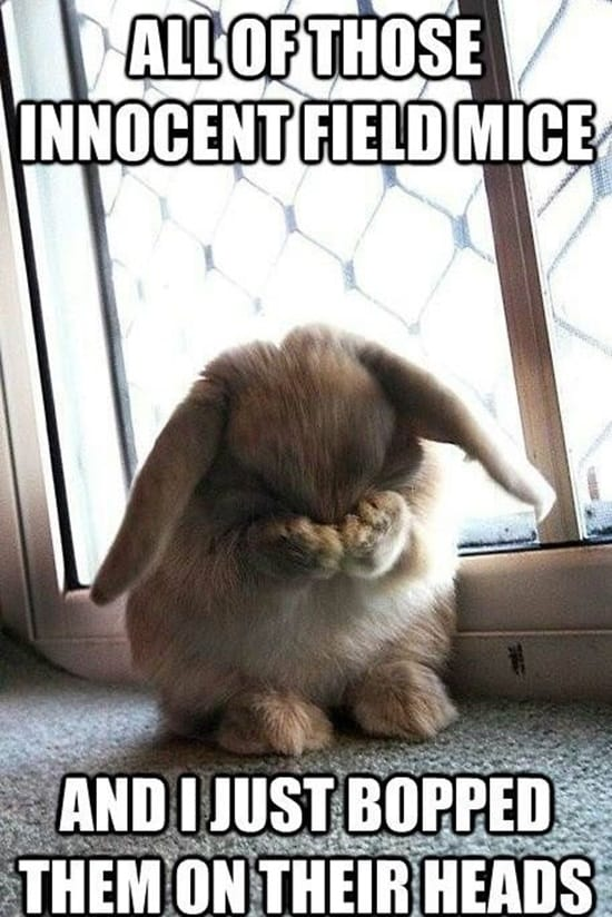 Funny Rabbit Pictures (22)