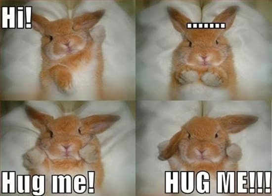Funny Rabbit Pictures (26)