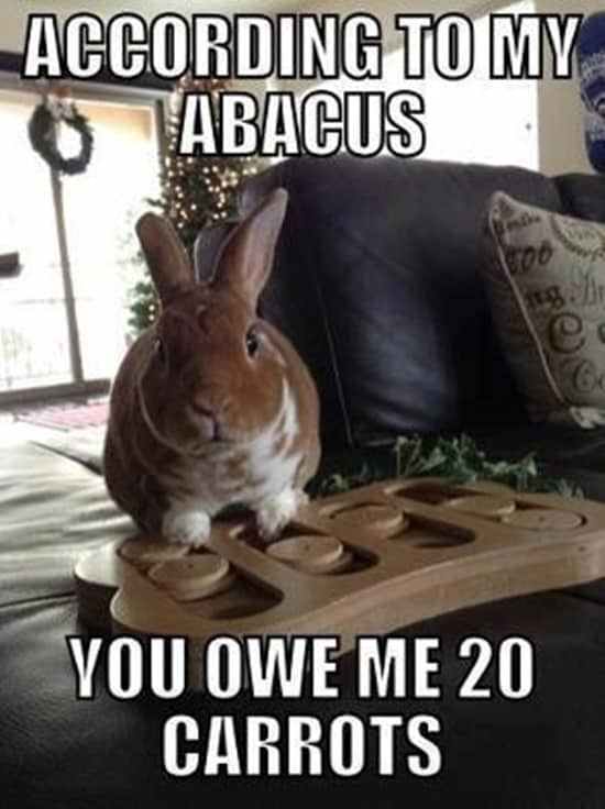 Funny Rabbit Pictures (29)