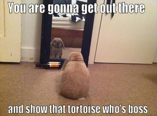Funny Rabbit Pictures (3)