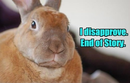 Funny Rabbit Pictures (5)