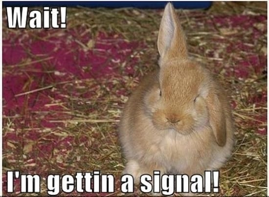 Funny Rabbit Pictures (8)