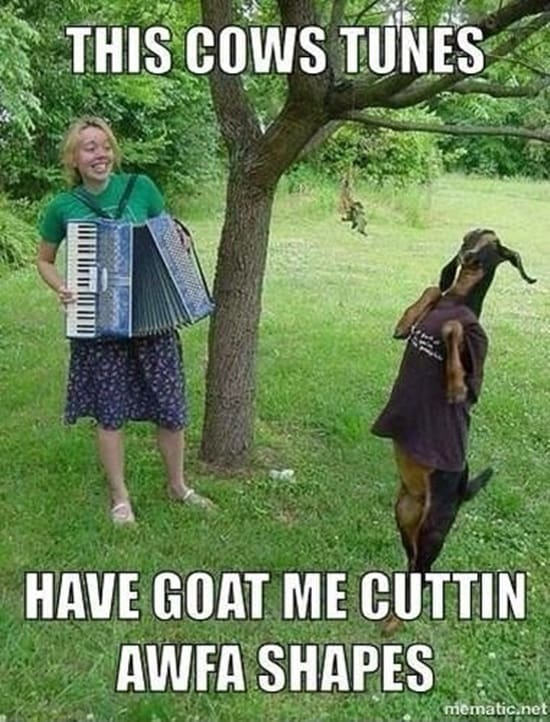 Funny goat pictures (21)