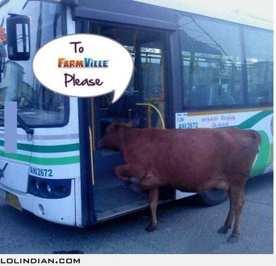 funny cow pictures (24)