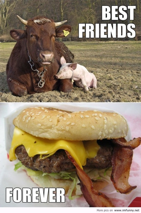 funny cow pictures (25)