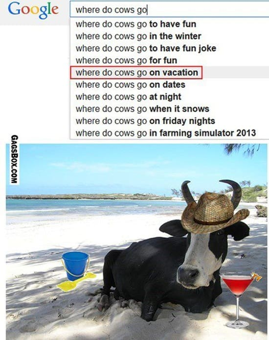 funny cow pictures (27)