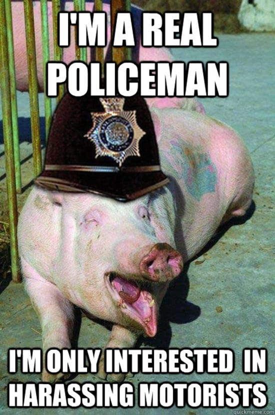funny pig pictures 30 (1)