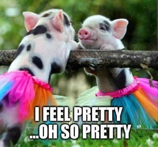 funny pig pictures 30 (2)