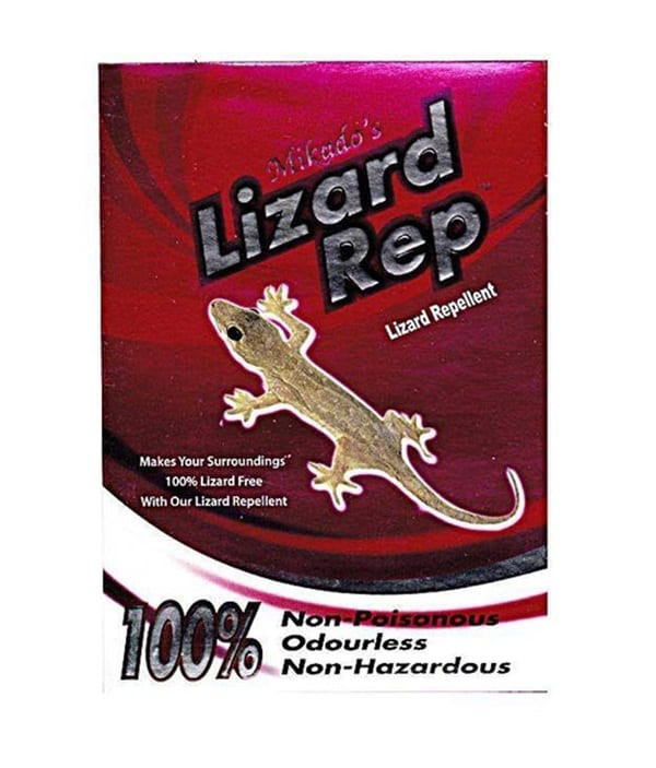 get rid of lizards at home (6)