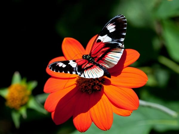 beautiful picturesof flower and butterflies (1)