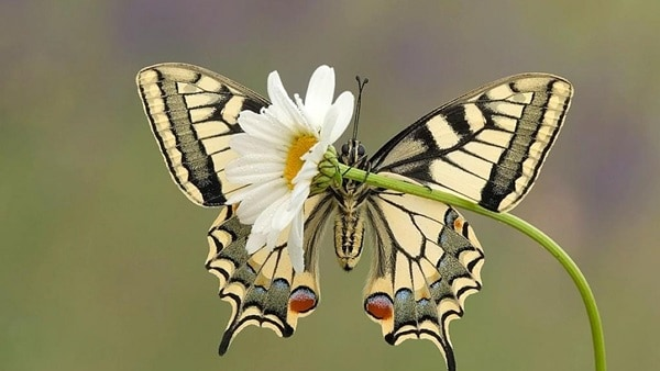 beautiful picturesof flower and butterflies (10)