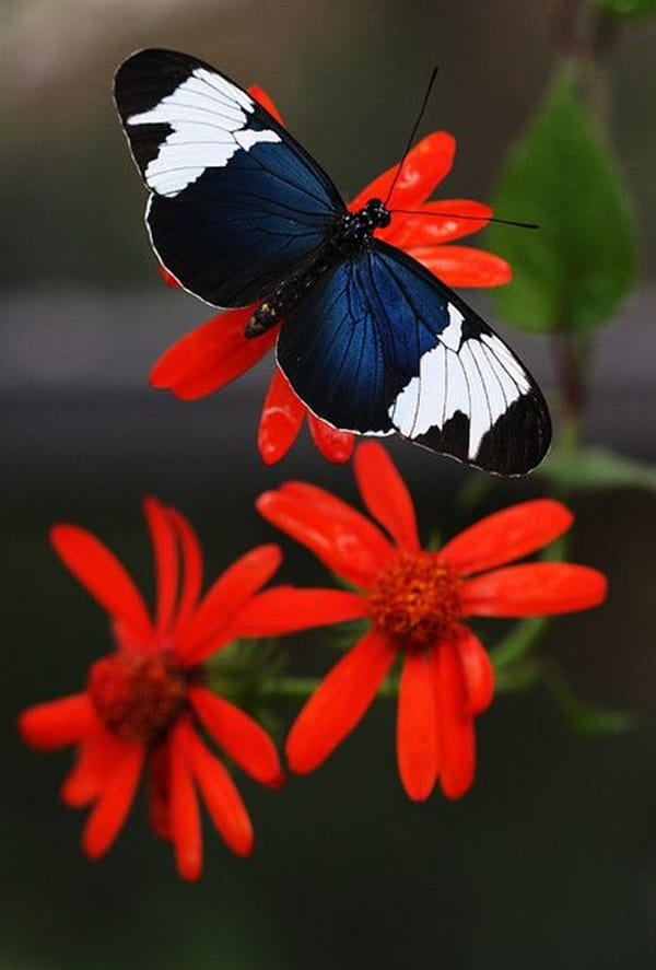 beautiful picturesof flower and butterflies (11)