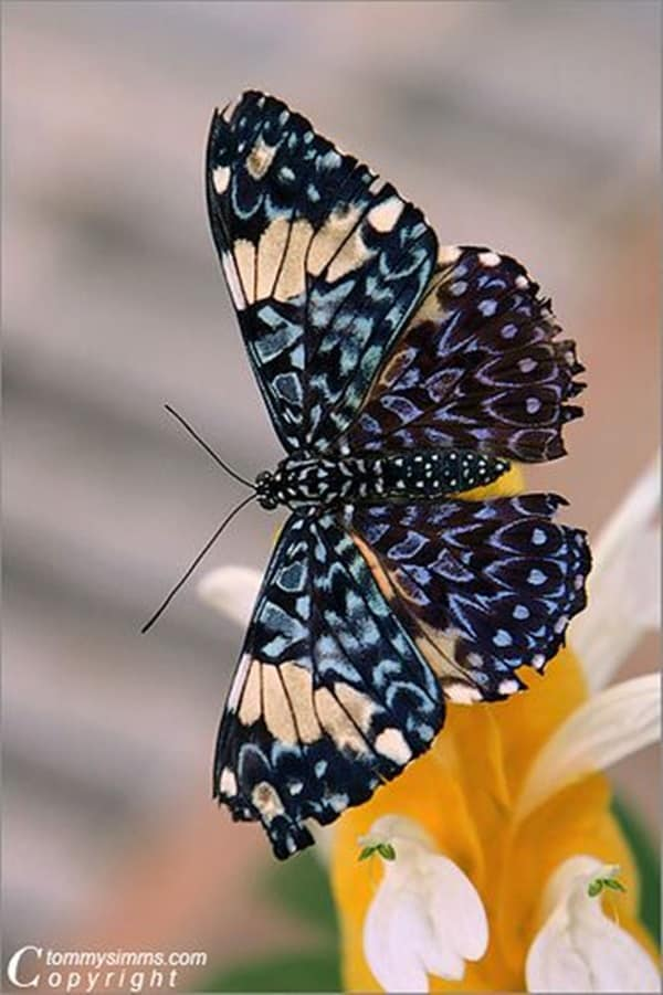 beautiful picturesof flower and butterflies (13)